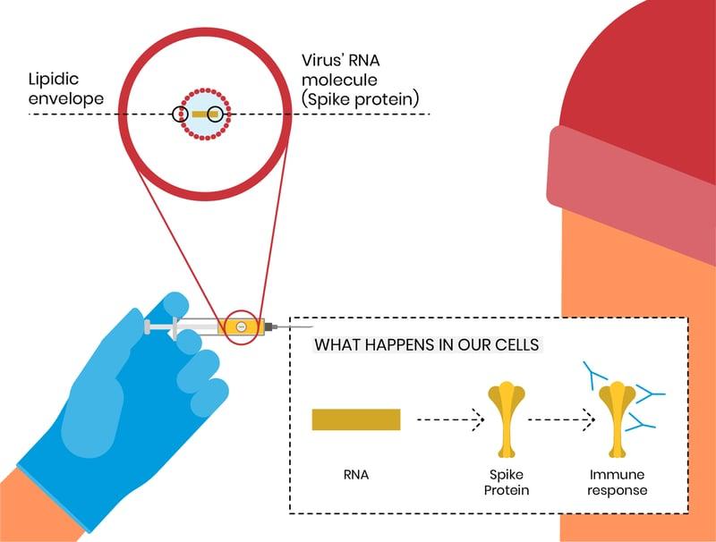 Vaccines_Covid_SARS-CoV-2_overview_San_Raffaele_University (5)