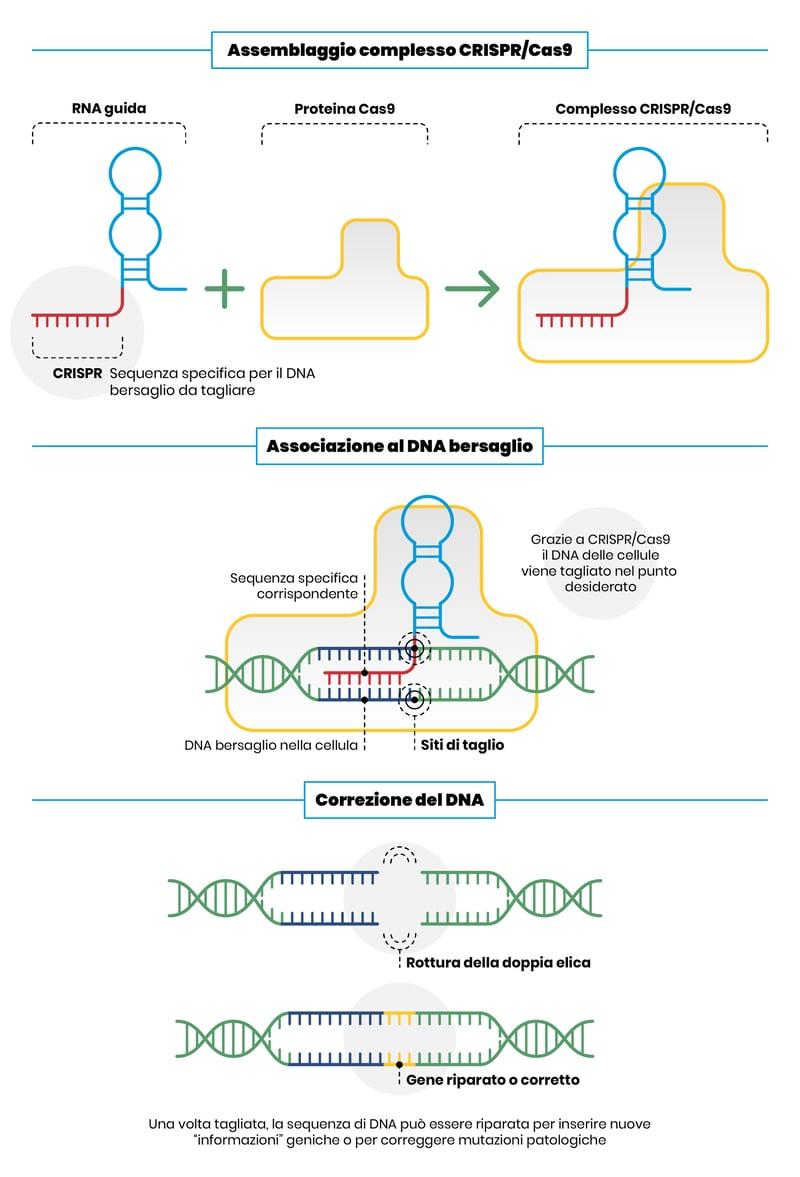 CRISPR_Cas9_rivoluzionarie_forbici_genetiche_da_Nobel_UniSR_2