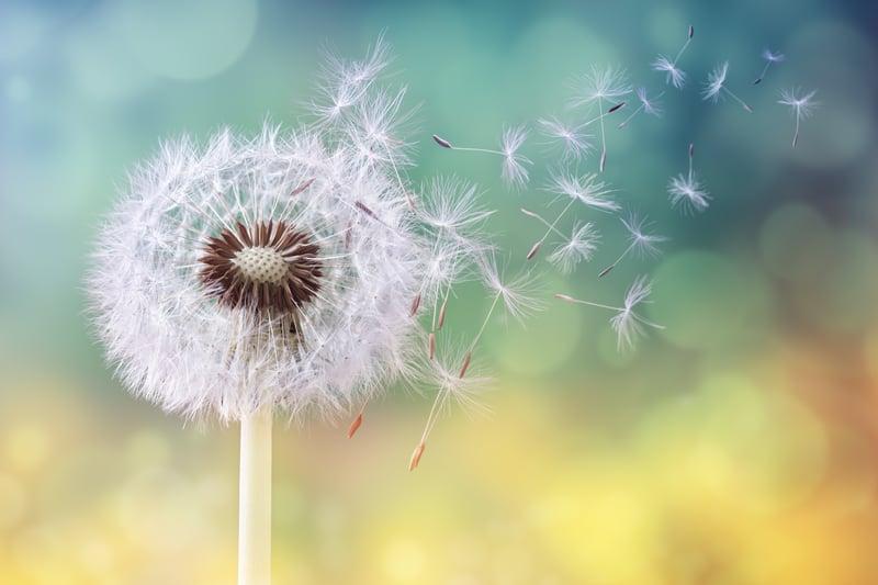 Primavera_allergie_Covid_vaccino (4)
