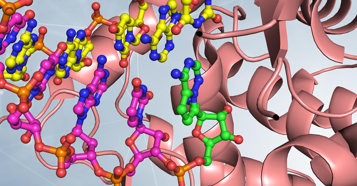 "RNA polimerasi, la ""fotocopiatrice distratta"" di SARS-CoV-2"